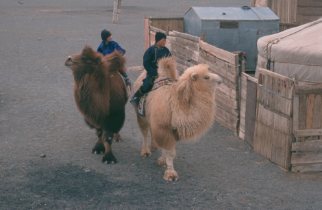 «Historien om den gråtende kamel» (2003) Byambasuren Davaa & Luigi Falorni. Foto: Filmweb.